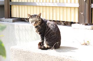 うつぼ公園の「さくら耳の猫」